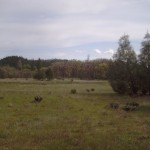 RanchoAg_meadow_04.01.08_0047